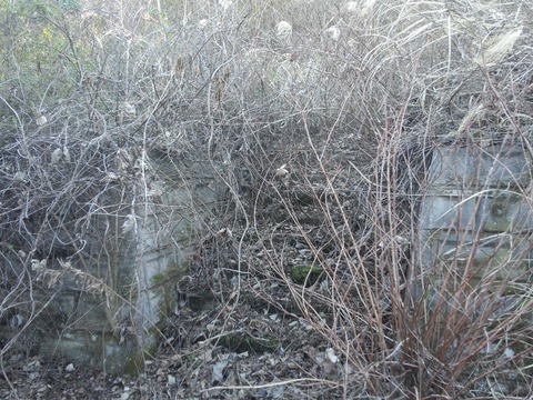臼作の放棄住宅地 (7)