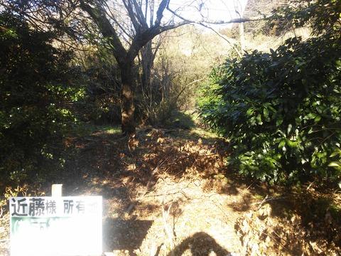 麻生新田 山林の分譲地 (13)