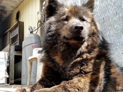 日向ぼっこ犬