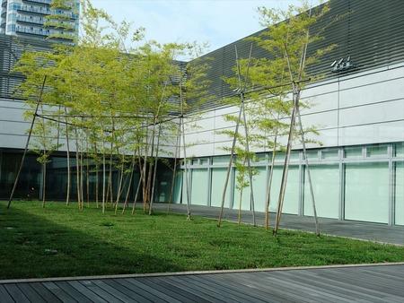 23屋上には竹の植栽