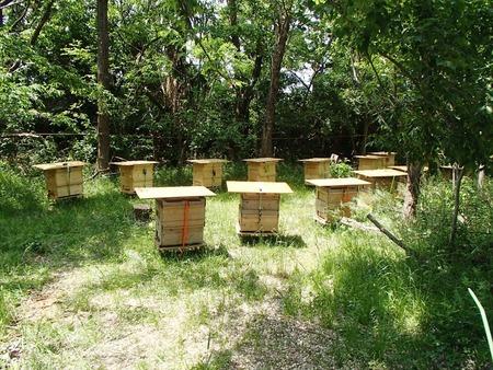 06ミツバチ巣箱