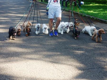 09犬の散歩14匹