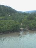 修学旅行でカヌーしたマングローブ発見!なつっ