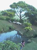 樋川を上から