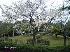 IMGP4871-1
