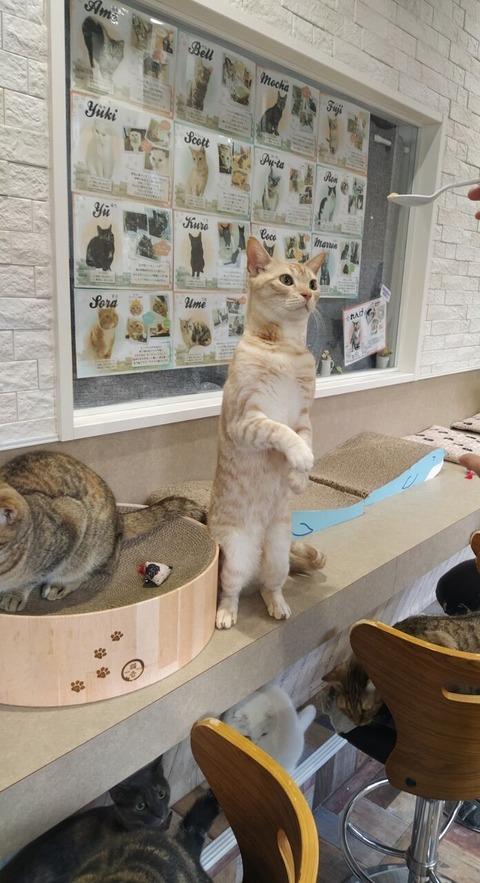 猫カフェ4