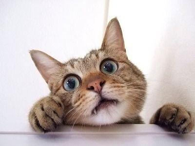 【画像】見えない下半身が凄く気になる猫の画像がこちらwwww