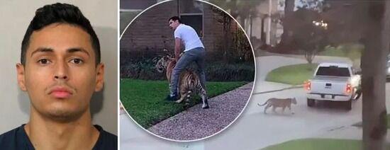 【アメリカ】トラを連れて逃げていた男を逮捕、トラは行方不明に