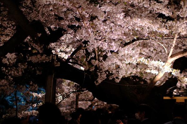 千鳥ヶ淵の桜X-Pro2005