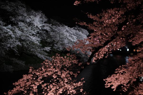 千鳥ヶ淵の桜X-Pro2007