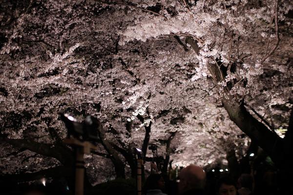 千鳥ヶ淵の桜X-Pro2008
