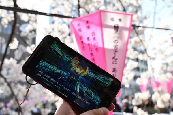 目黒川FGO桜ガチャ-9