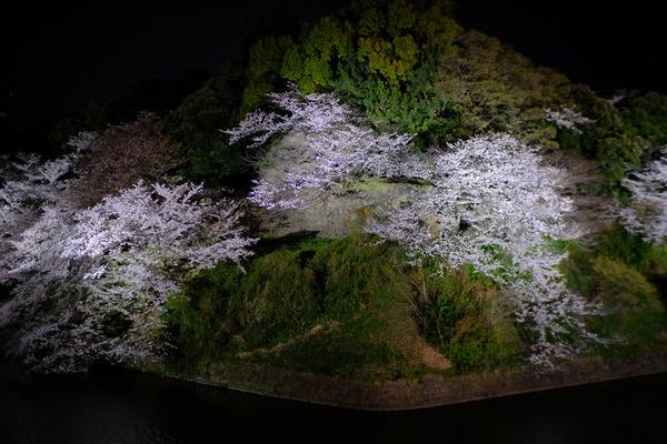 千鳥ヶ淵の桜X-Pro2004