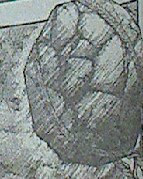 20130221_062037