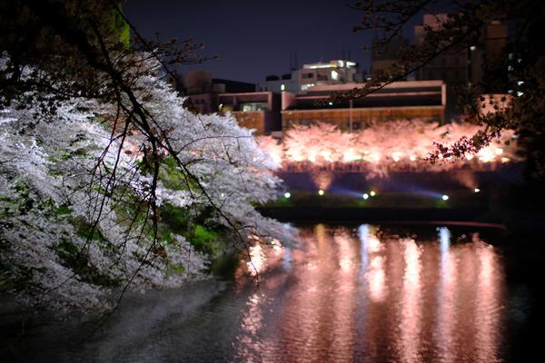 千鳥ヶ淵の桜X-Pro2001