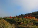 標高1500m付近の紅葉