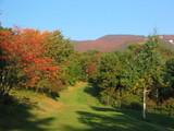緑が交差している紅葉