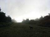 朝靄のターク