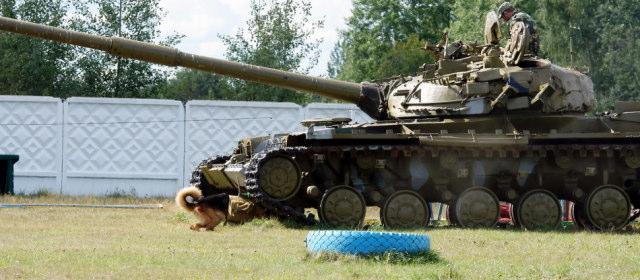 対戦車犬_7