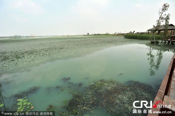 東湖の水質汚染_5