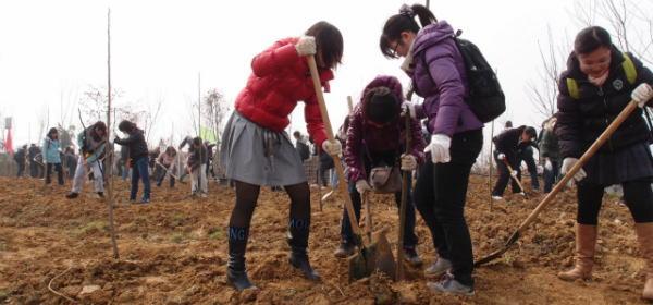 中国の植樹プロジェクト