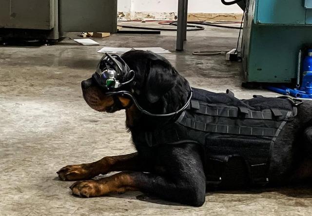 ARメガネ軍用犬_1