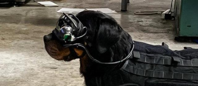 ARメガネ軍用犬_3