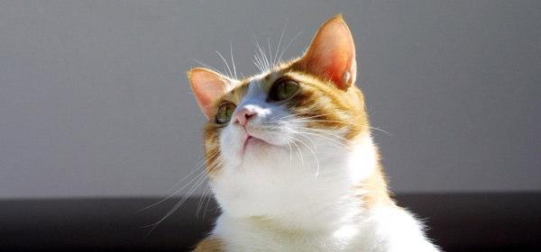 ネコが見る世界