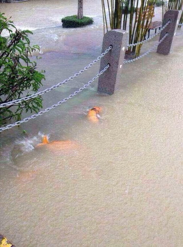 深セン市豪雨_4