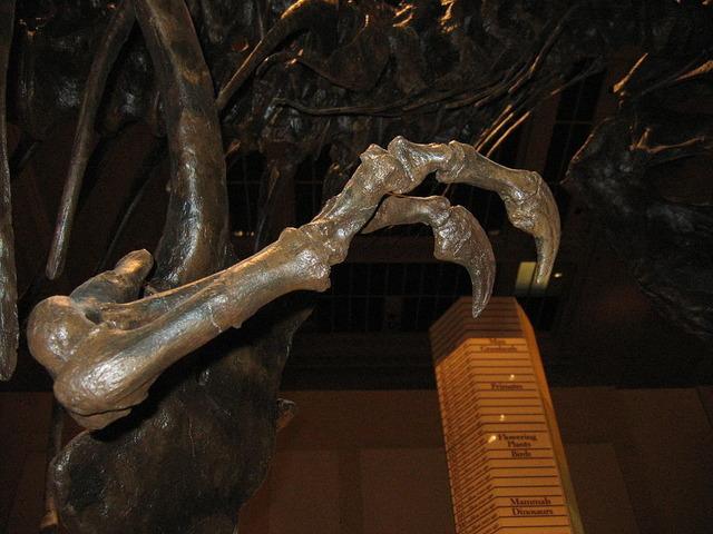 ティラノサウルスの腕