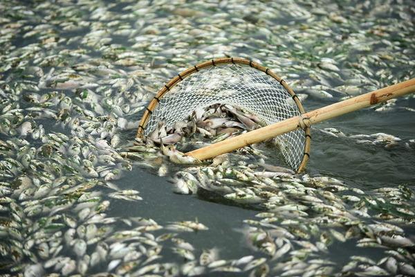 魚の大量死_3