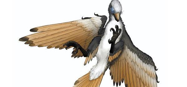 新種の鳥類