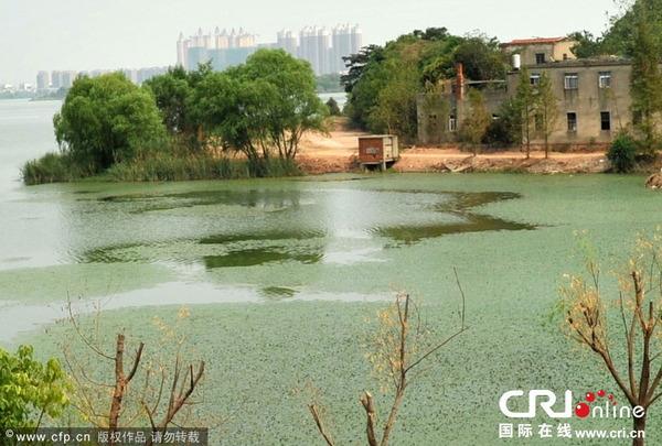 東湖の水質汚染_4