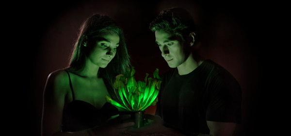 自己発光植物