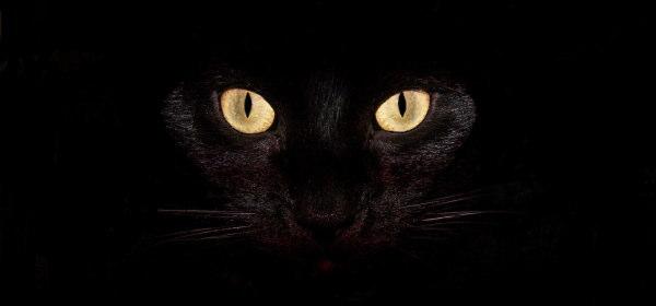 ネコの襲撃