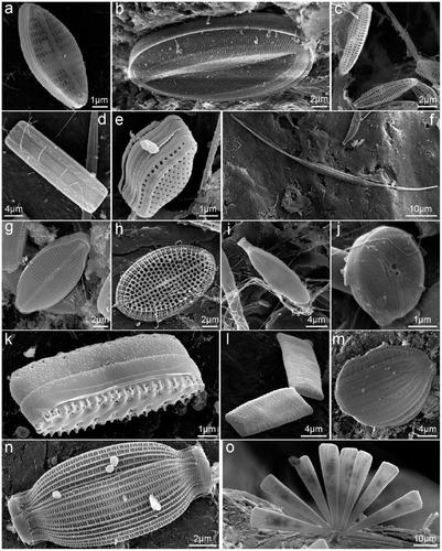 プラスチックを食べる海洋微生物