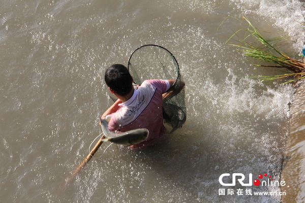 魚を盗む中国人_5