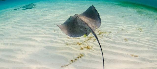 「毒 海洋生物」の画像検索結果