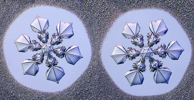模様が同じ雪の結晶_1