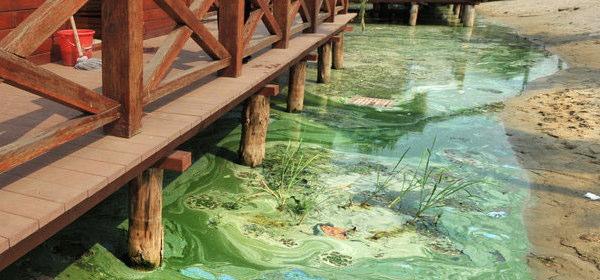 東湖の水質汚染