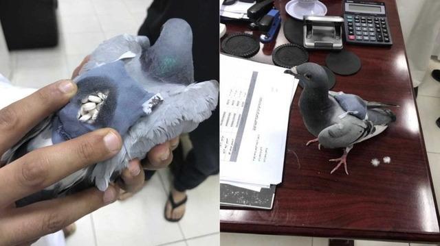 違法薬物を輸送する鳩