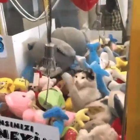 ネコとUFOキャッチャー_3