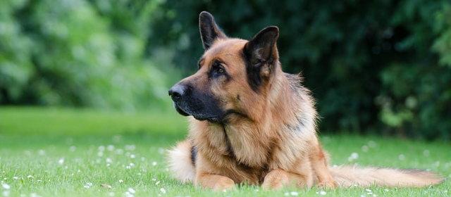 ロシアの犬の名前、政治家で多いのはトランプ