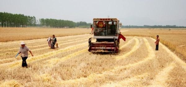 中国の耕地