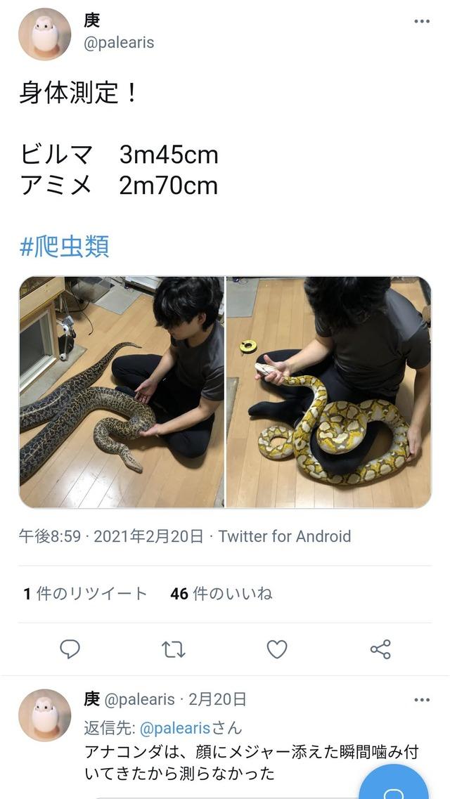 横浜アミメニシキヘビ1