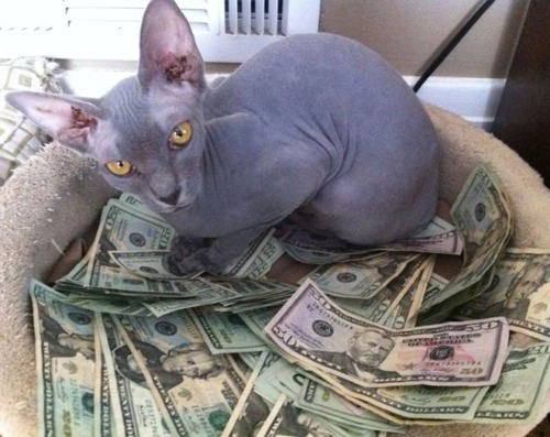 a_few_very_wealthy_cats_640_02