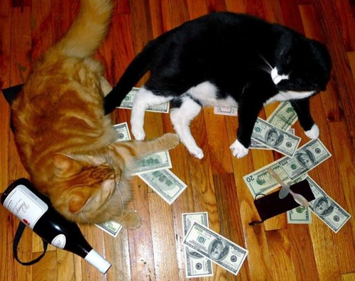 a_few_very_wealthy_cats_640_12