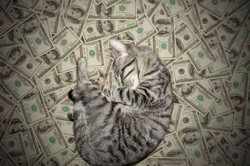 a_few_very_wealthy_cats_640_20