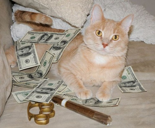 a_few_very_wealthy_cats_640_17