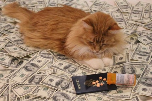 a_few_very_wealthy_cats_640_19